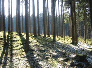 Noch nicht ganz Frühling im Wald, aber bald