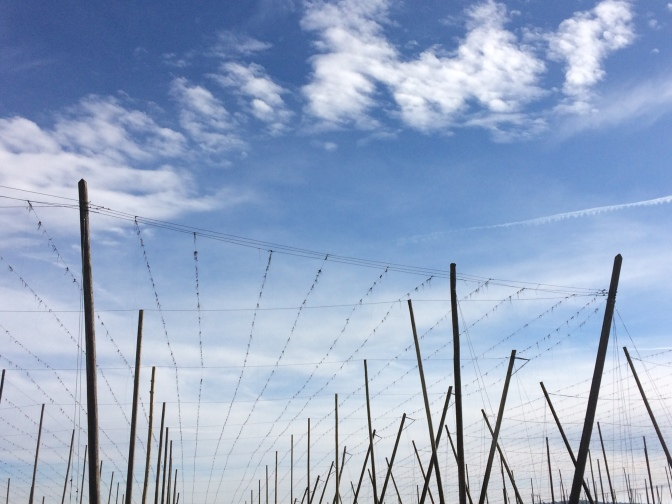 Sonntagsfreude: Faschingshimmel