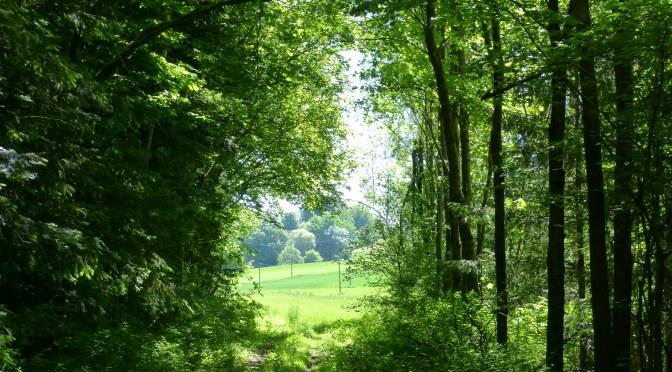 Spruch zum Wochenende: Wald